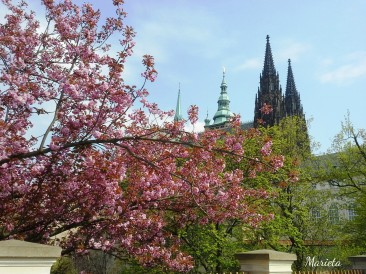 Nada como viajar en primavera